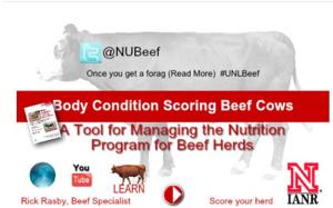 NUBeef-BCS (body condition scoring app) from UNL Extension